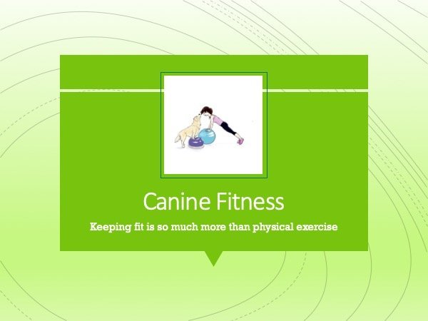 Canine fitness